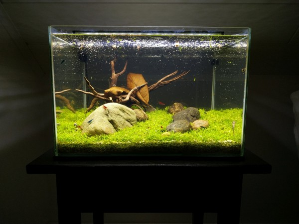 Aquascaping-Low-Tech-Wohnzimmer
