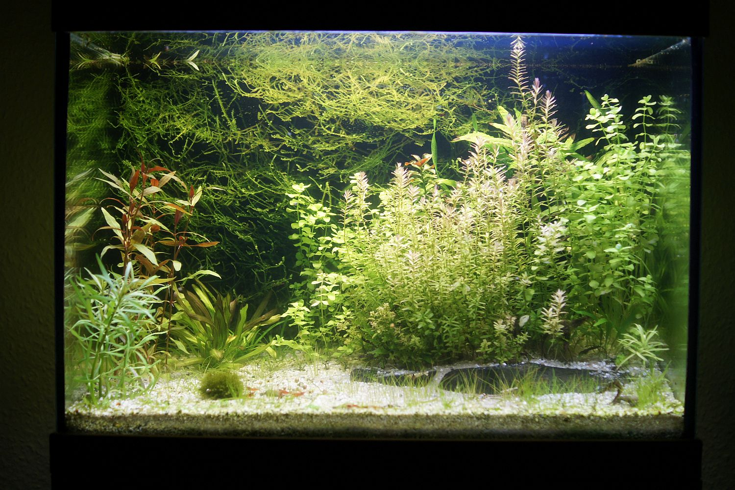 low-tech-aquarium1